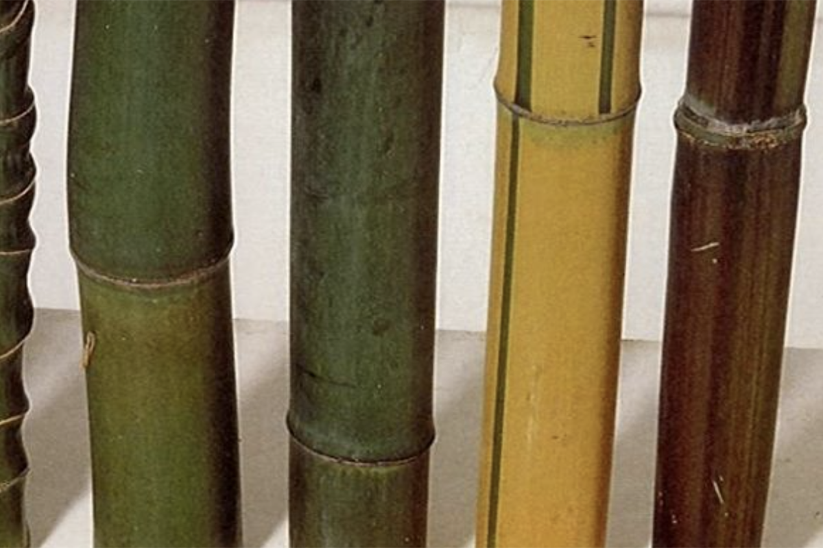 Bamboo in Construction - The green steel of the 21st century